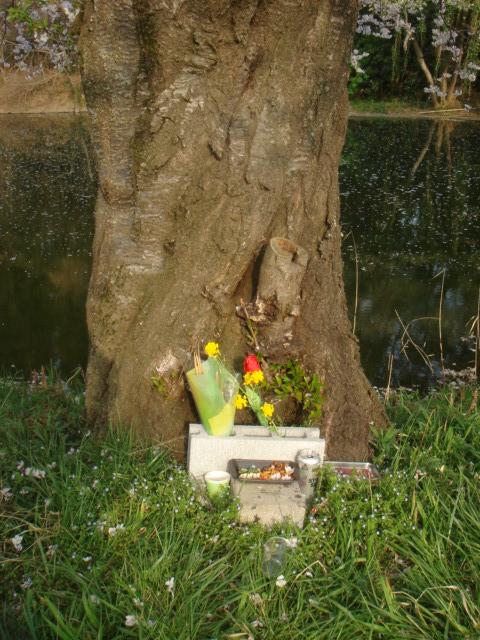 つくば農林研究団地の桜並木_b0124462_2257751.jpg
