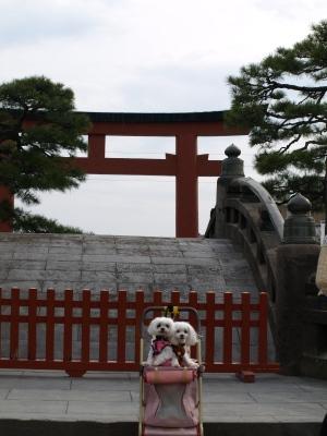 カリとエンジェル鎌倉でお花見&初詣(遅!)パート2_b0001465_14383811.jpg