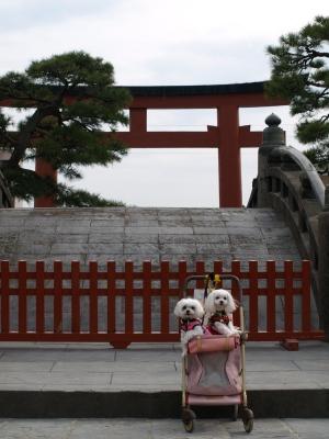 カリとエンジェル鎌倉でお花見&初詣(遅!)パート2_b0001465_14405928.jpg
