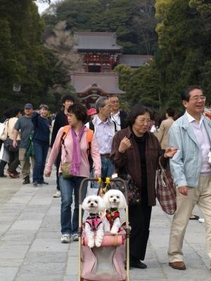 カリとエンジェル鎌倉でお花見&初詣(遅!)パート2_b0001465_1442532.jpg