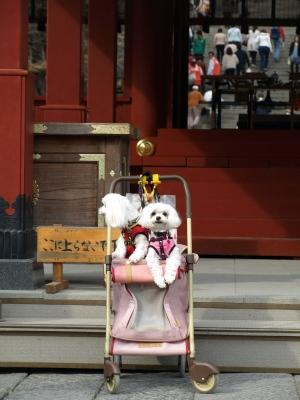 カリとエンジェル鎌倉でお花見&初詣(遅!)パート2_b0001465_14551930.jpg