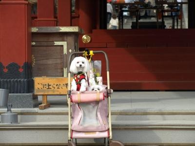 カリとエンジェル鎌倉でお花見&初詣(遅!)パート2_b0001465_14554484.jpg