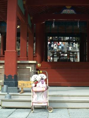 カリとエンジェル鎌倉でお花見&初詣(遅!)パート2_b0001465_1457363.jpg