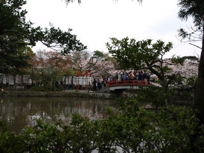 カリとエンジェル鎌倉でお花見&初詣(遅!)パート2_b0001465_15192963.jpg