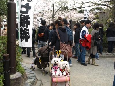 カリとエンジェル鎌倉でお花見&初詣(遅!)パート2_b0001465_15252617.jpg