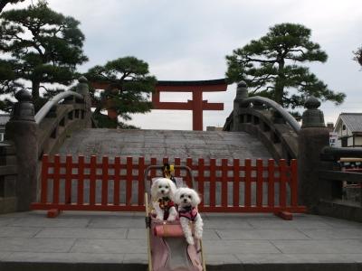 カリとエンジェル鎌倉でお花見&初詣(遅!)パート2_b0001465_15262042.jpg
