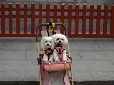 カリとエンジェル鎌倉でお花見&初詣(遅!)パート2_b0001465_1527165.jpg