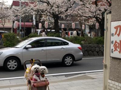 カリとエンジェル鎌倉でお花見&初詣(遅!)パート2_b0001465_154625.jpg