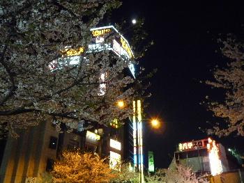 東京桜_d0029066_7272391.jpg