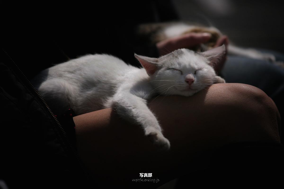 猫にゃん_f0021869_2233511.jpg