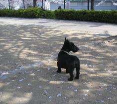 お花見with犬たち_e0055098_449554.jpg