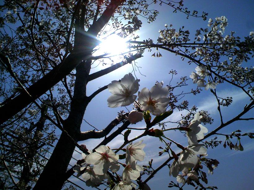 春夢心地_b0060102_247196.jpg