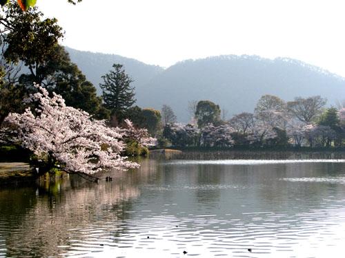 嵯峨大覚寺2 大沢の池_e0048413_22231263.jpg
