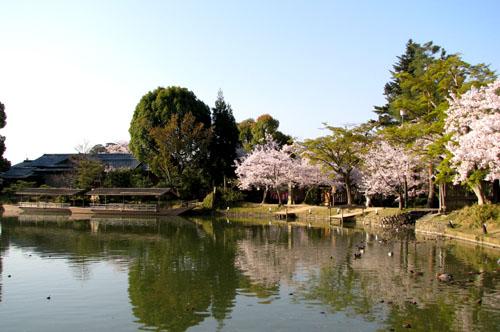 嵯峨大覚寺2 大沢の池_e0048413_22233115.jpg