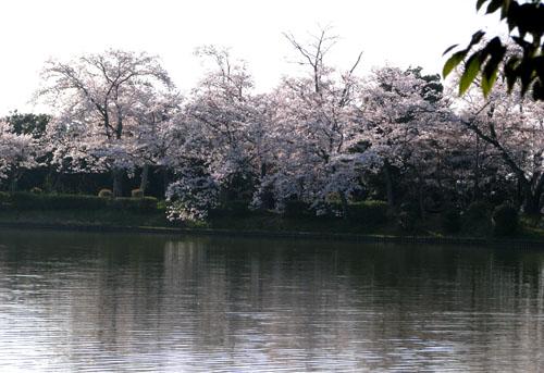 嵯峨大覚寺2 大沢の池_e0048413_22235111.jpg