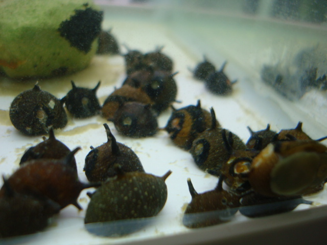 熱帯魚・金魚・日本産淡水魚・水草 _f0189122_15544436.jpg