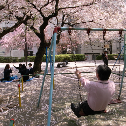 Cherry Moment  <DAY 6 桜酔いの友>_a0113732_13131737.jpg