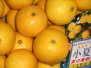 /// 今日のおめざは土佐・高知の小夏(ニューサマーオレンジ)です ///_f0112434_085787.jpg