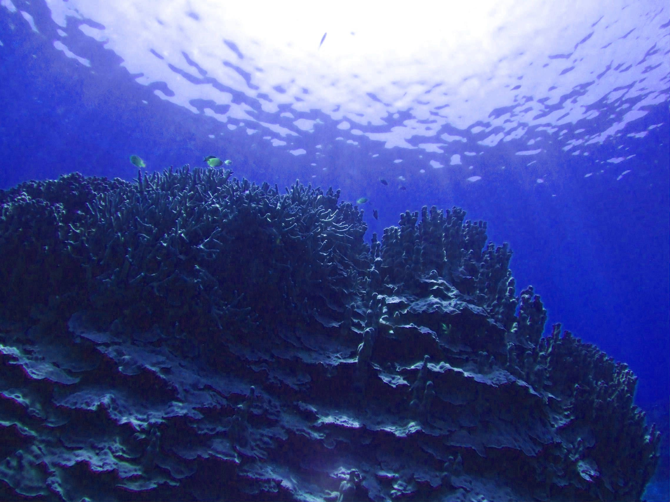 海の中 に対する画像結果
