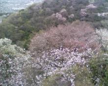 お花見_e0173239_13481584.jpg