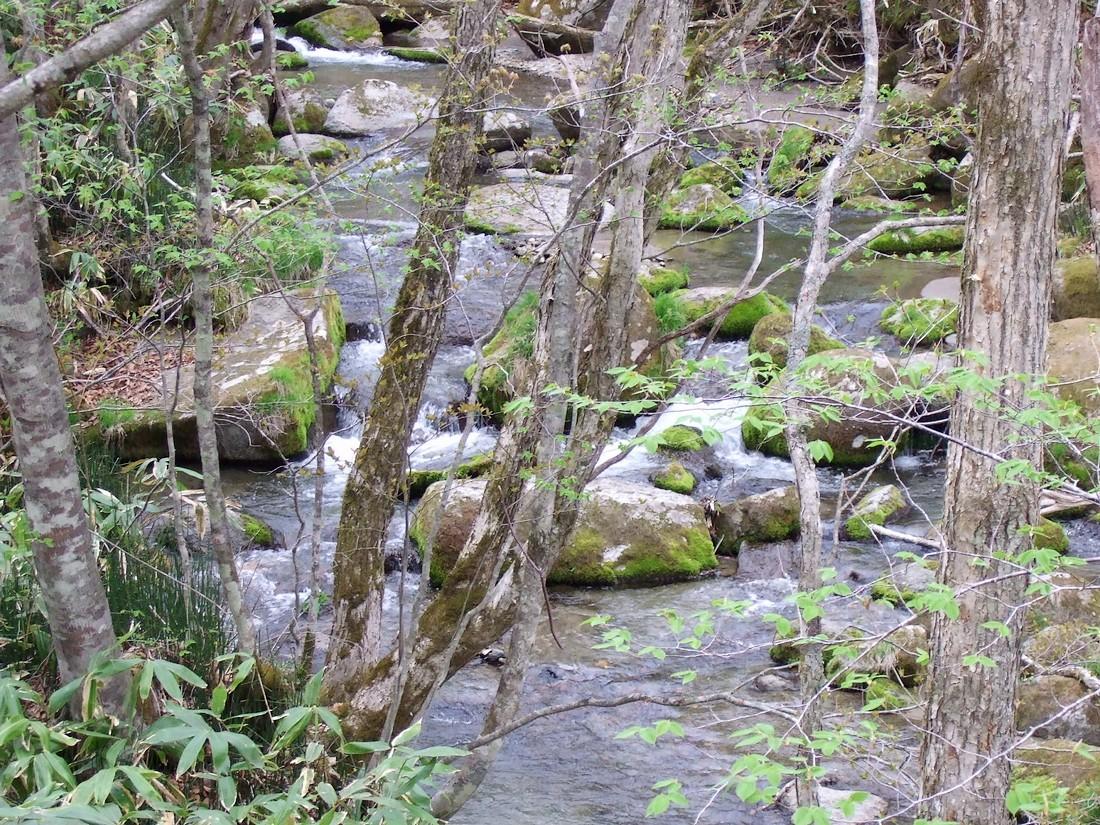 春の滝_d0001843_22242311.jpg