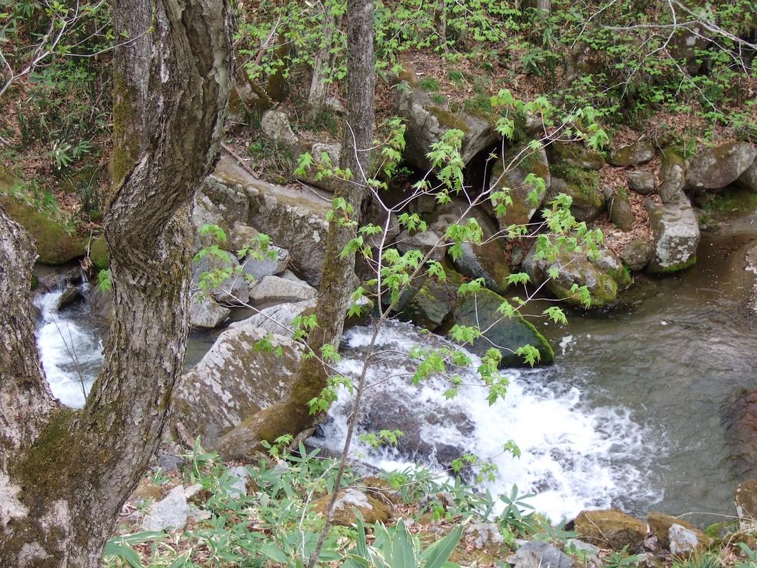 春の滝_d0001843_2237432.jpg