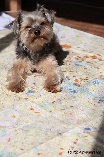 地図の上のお散歩_c0024345_10105994.jpg