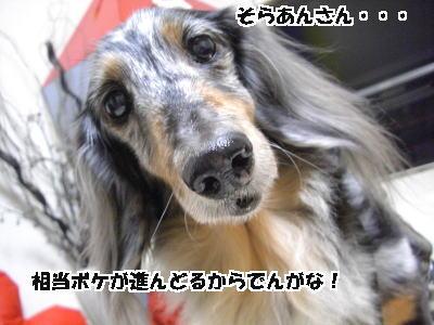d0020869_1911959.jpg