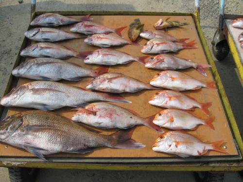 タイが大漁ばい_a0077071_14522736.jpg