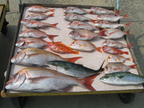 タイが大漁ばい_a0077071_14552794.jpg