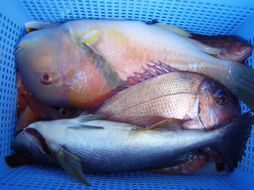 タイが大漁ばい_a0077071_1522748.jpg