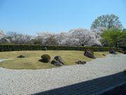 ご近所の櫻 (3) ~万博公園櫻づくし~_b0102572_23143739.jpg
