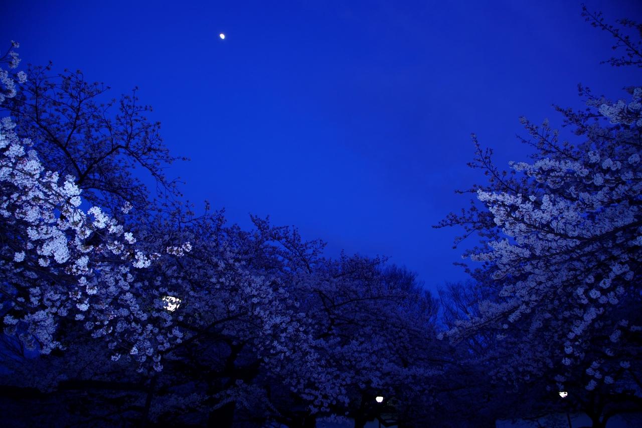 Moon Light_e0001789_0341469.jpg