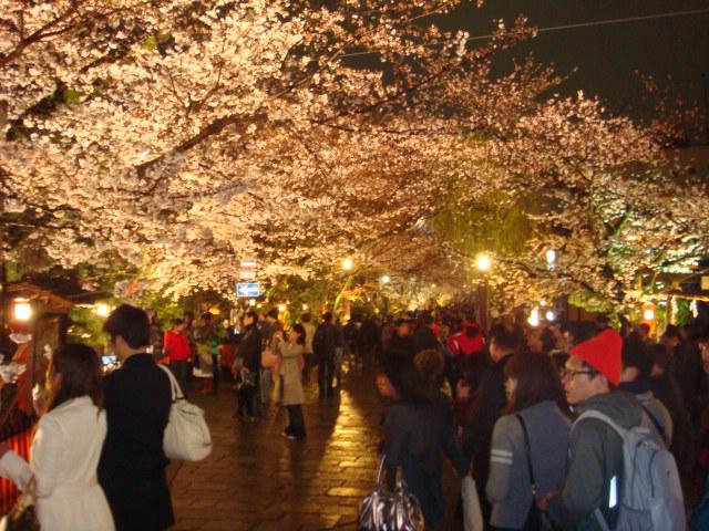 夜桜_f0201289_1729475.jpg