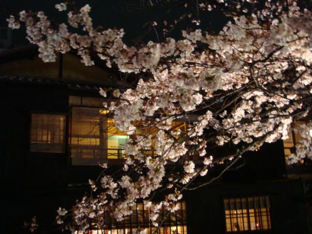 夜桜_f0201289_17303077.jpg