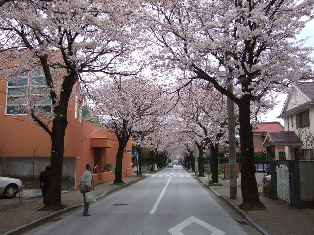 小田原の桜散策 -長興山のしだれ桜ー_e0024094_12135360.jpg
