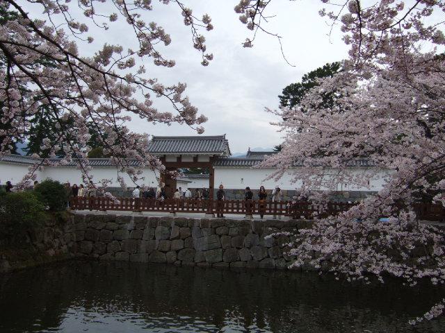 小田原の桜散策 -長興山のしだれ桜ー_e0024094_12193942.jpg