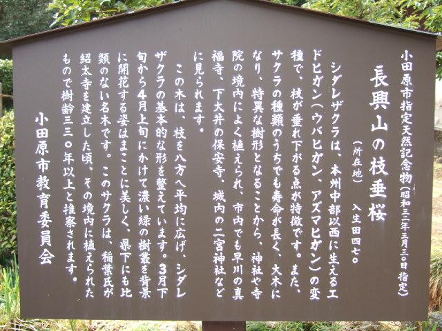 小田原の桜散策 -長興山のしだれ桜ー_e0024094_1282928.jpg