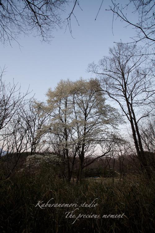 09/4/10   夕暮れの散歩_c0137403_22105440.jpg