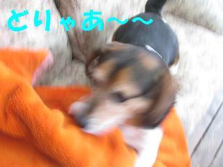 d0104209_21443421.jpg