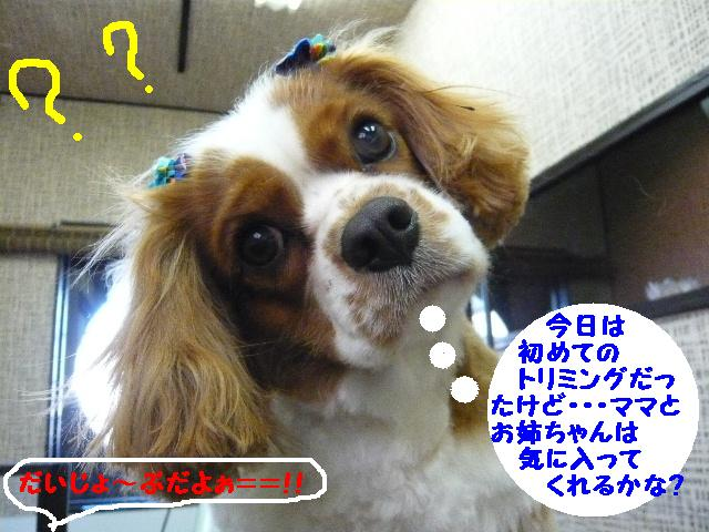 b0130018_13404049.jpg