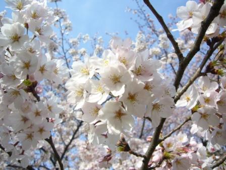 春_c0163819_20291444.jpg