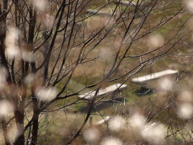 雪国植物園_e0169421_21331751.jpg