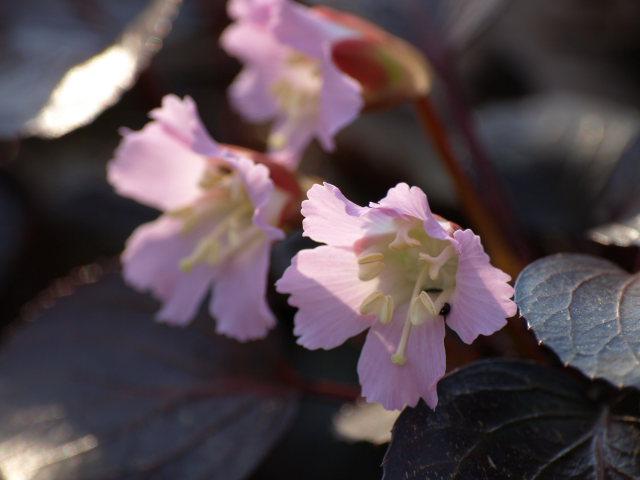 雪国植物園_e0169421_21332820.jpg