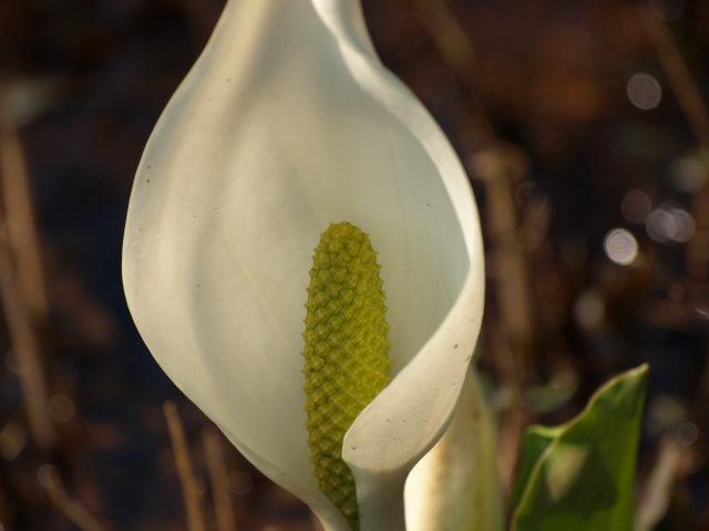雪国植物園_e0169421_2133962.jpg