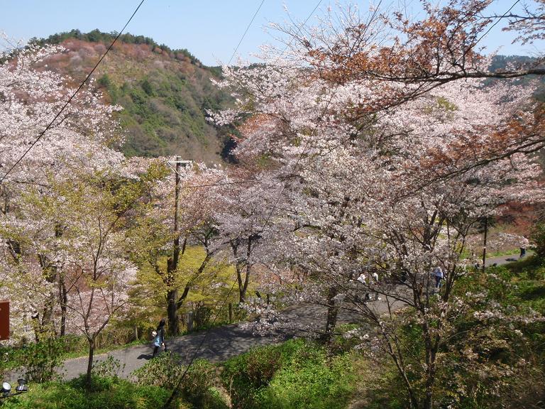 吉野山の桜_e0154524_19442978.jpg