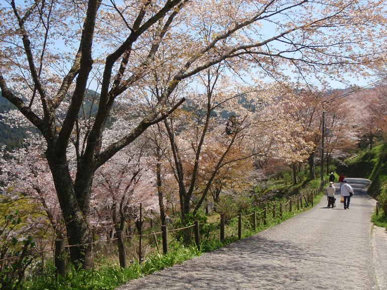吉野山の桜_e0154524_19445967.jpg