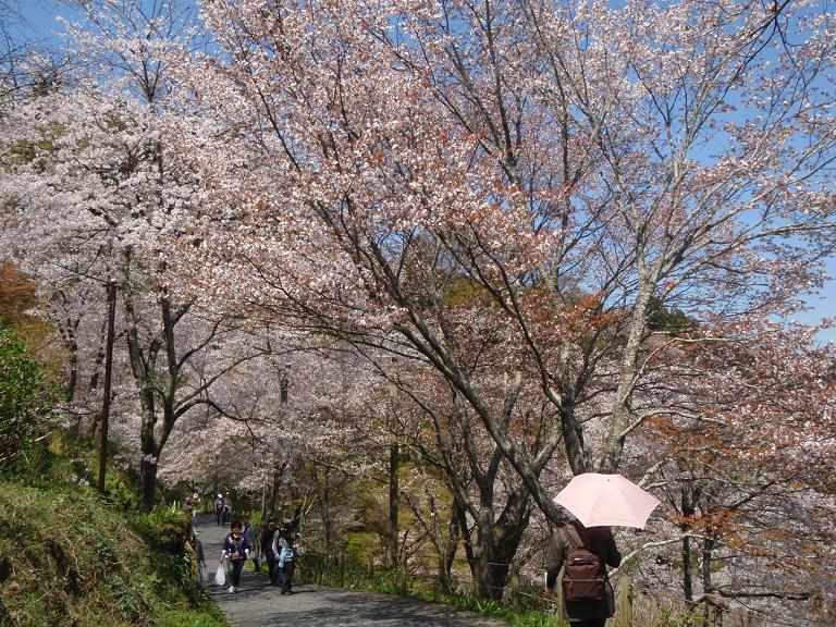 吉野山の桜_e0154524_19454430.jpg