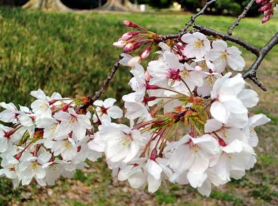 桜花賞の前に阪神牝馬Sのポルトフィーノです。_a0009035_1556207.jpg