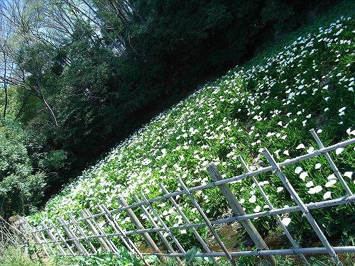 朝の散歩_d0113340_10463222.jpg